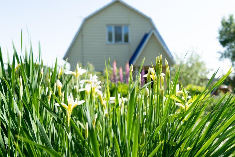 Photo d'herbe d'été à l'arrière-plan de la maison image stock