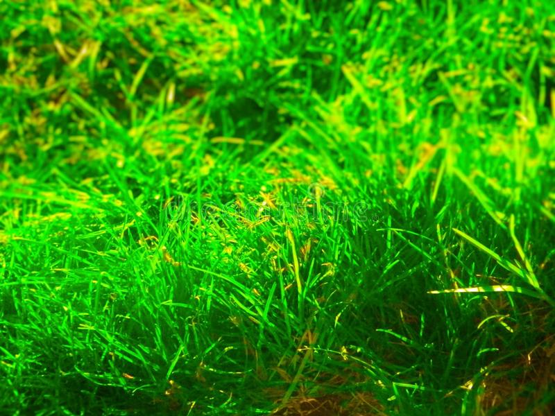 Photo d'herbe photo libre de droits