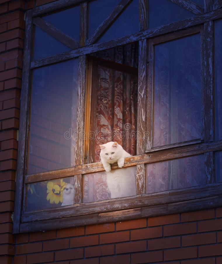 Photo d'un chat blanc dans la fenêtre photographie stock libre de droits