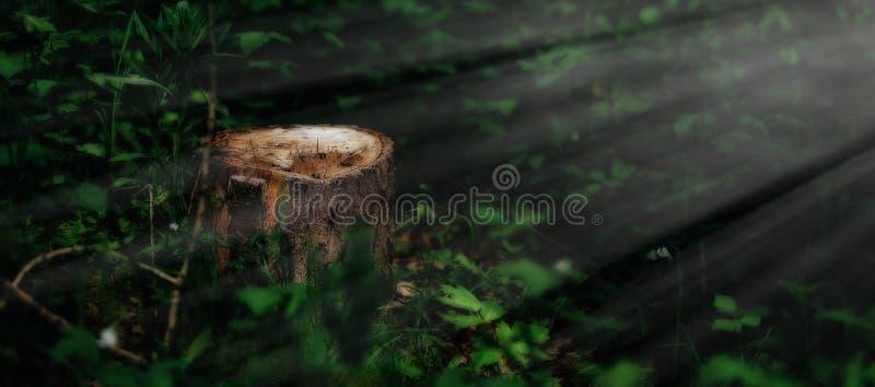 Photo d'un tronçon pittoresque à la lumière du soleil dans la forêt verte, printemps Belle nature pendant le matin dans le brouil images stock