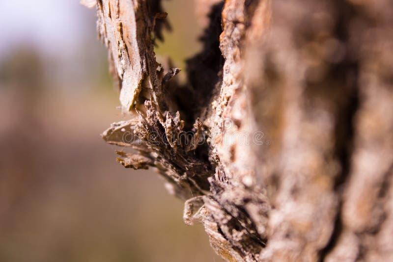 Photo d'une écorce d'un arbre avec un fond brouillé images libres de droits