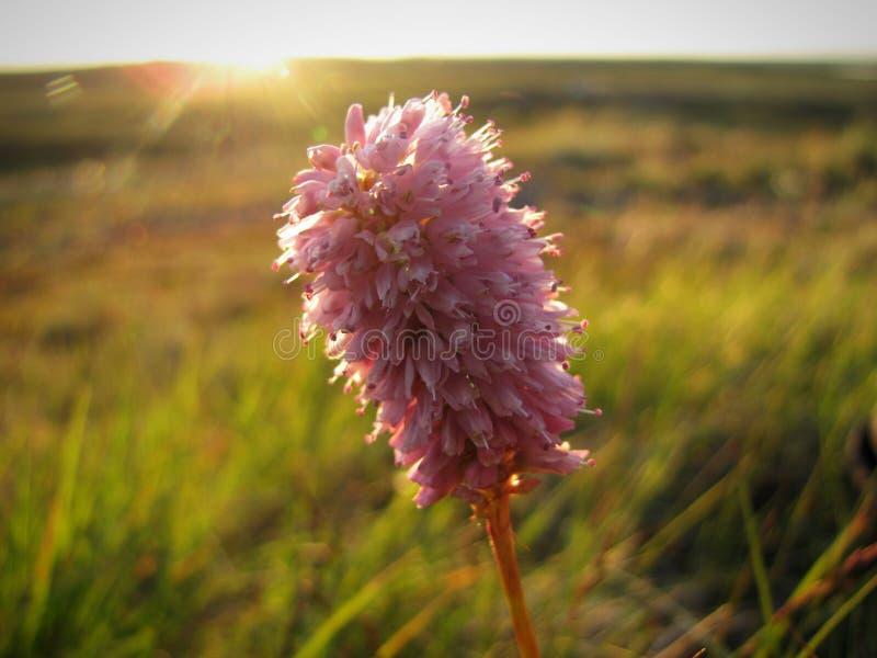 Photo d'une fleur photo stock