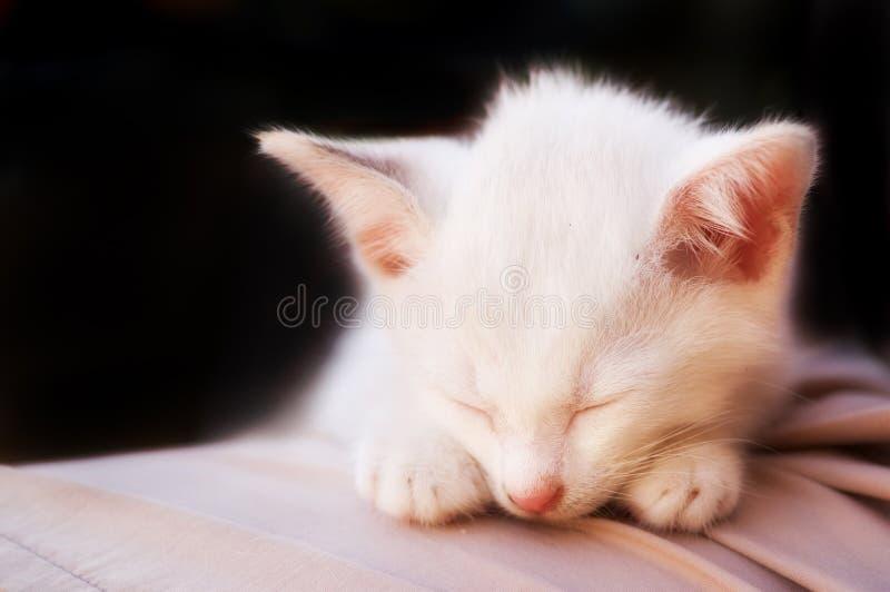 Photo de chat - sommeil angélique 2 - fond noir photos stock