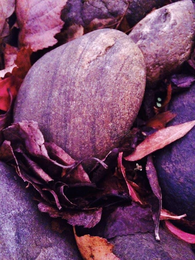 Photo de chute des feuilles et des roches images stock
