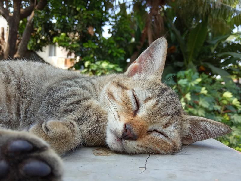 Photo de Close Up Cute Small Sleepy Wild Brown Cat au soleil matinal image stock