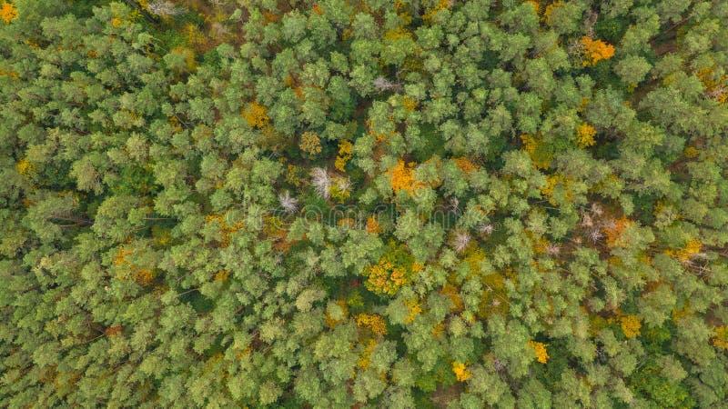 Photo de drone en haut de la forêt colorée en automne photos libres de droits