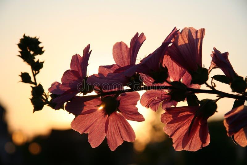 Photo de fleur Petaled de Brown pendant la journée images libres de droits