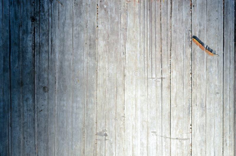 Photo de fond et de texture d'arbre en bambou sec images libres de droits