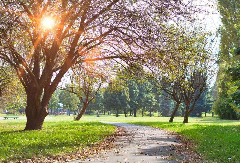 Photo de Footpath dans le parc photo stock