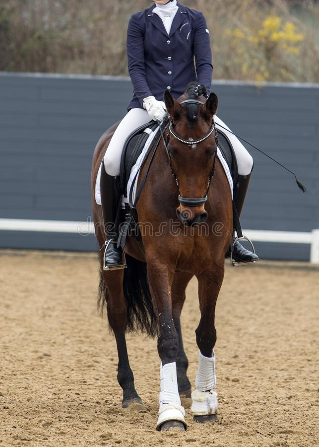 Photo de jeune joli cheval d'équitation de fille image stock