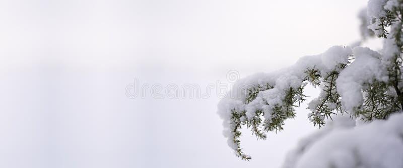 Photo de nature d'hiver image libre de droits