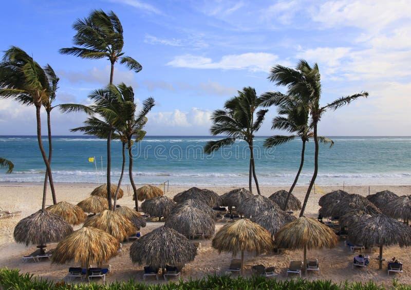 Photo de plage avec les palmiers et l'océan bleu photo libre de droits