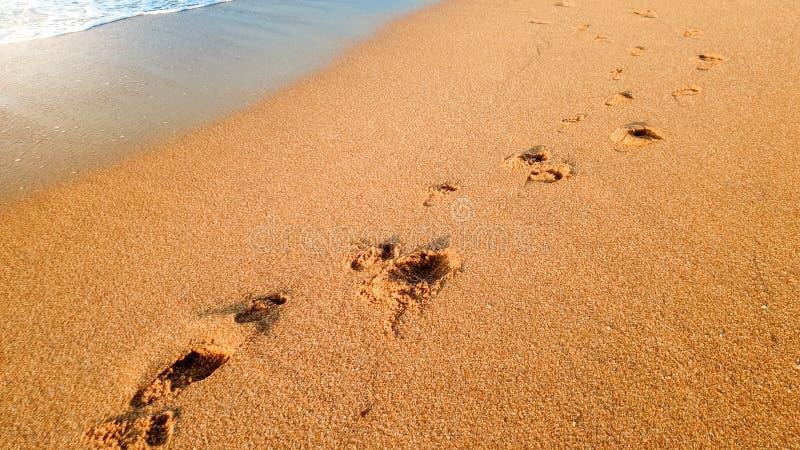 Photo de plan rapproché des vagues de mer calme lavant outre des empreintes de pas humaines sur le sable humide à la plage arénac image libre de droits