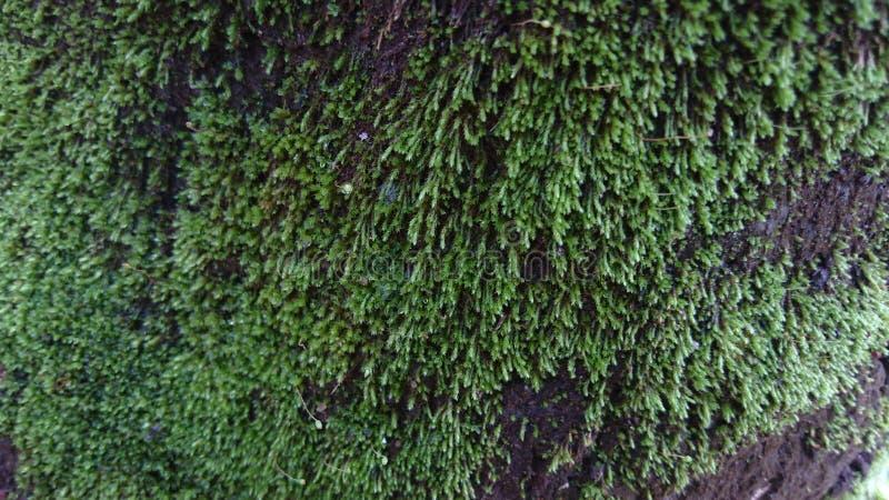 photo de plan rapproché de mousse de forêt sur l'écorce d'arbre morte images stock