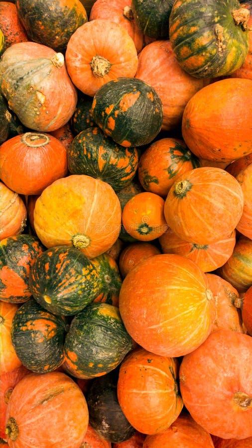 Photo de plan rapproch? de pumpking orange dans le soter begetable Texture de plan rapproch? ou mod?le des l?gumes m?rs frais Bel image stock