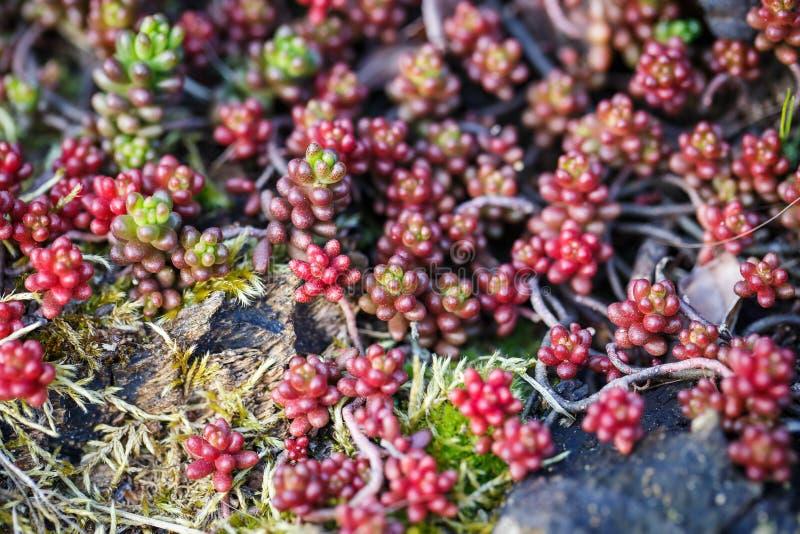 Photo de plante verte - faisant du jardinage photo stock
