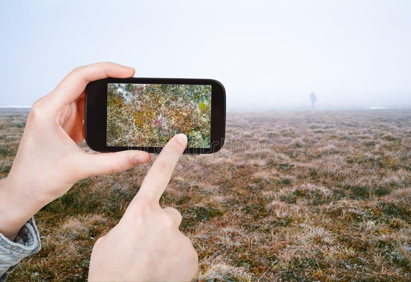 Photo de prise de touristes de toundra arctique au printemps photographie stock libre de droits