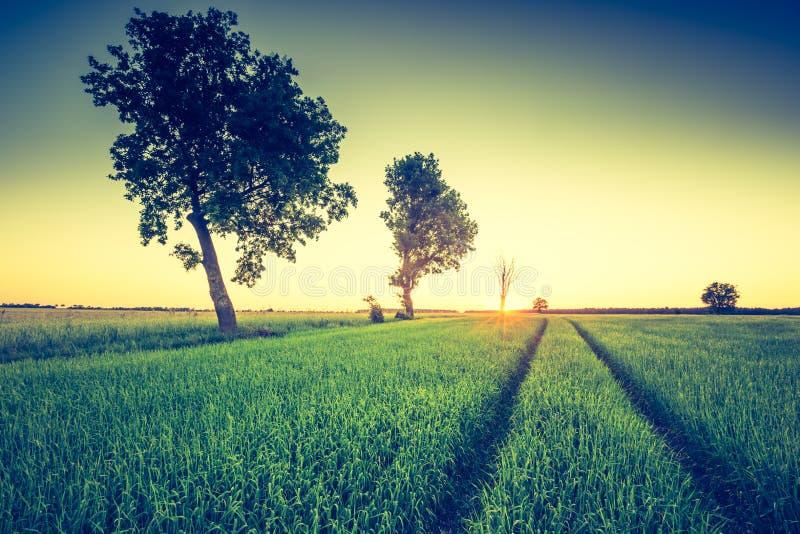 Photo de vintage de paysage vert de champ images libres de droits