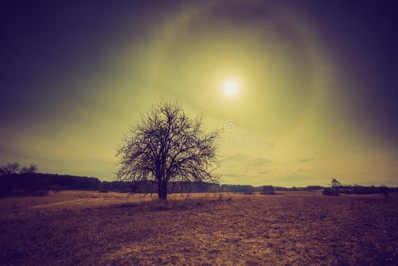 Photo de vintage des champs polonais avec l'arbre défraîchi photos stock