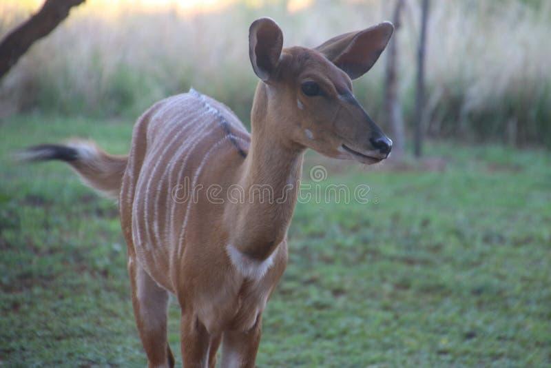 Photo Of A Deer Free Public Domain Cc0 Image