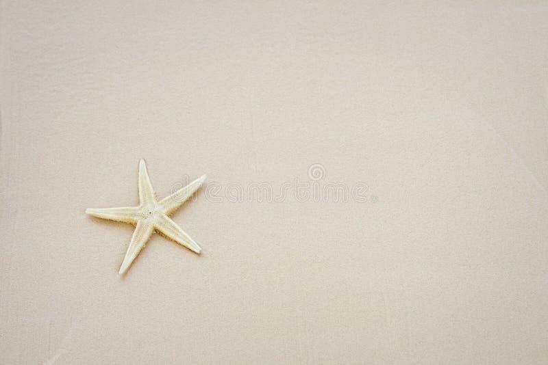 Photo des étoiles de mer sur une plage photos stock