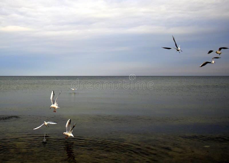 Photo des mouettes volant au-dessus de l'eau de bord de la mer photo libre de droits
