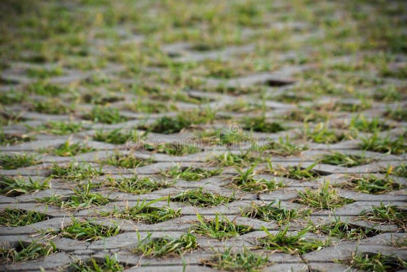 Photo des pavés s'élevant par l'herbe verte photo libre de droits