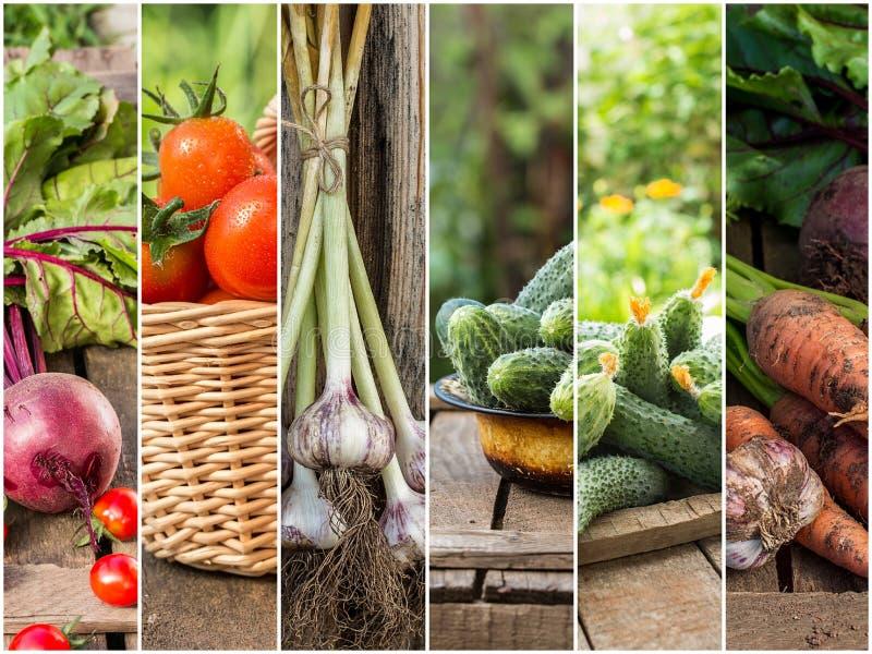 Photo des rayures colorées de mélange avec des ingrédients de nourriture images libres de droits
