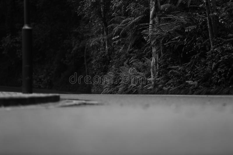Black white road park road next to plants royalty free stock images