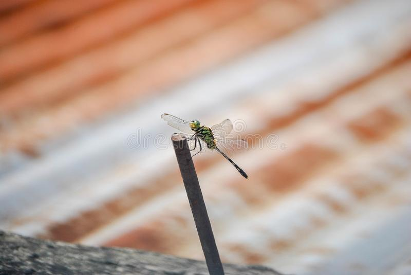 Photo of a dragonfly laying on a wire. stock photos