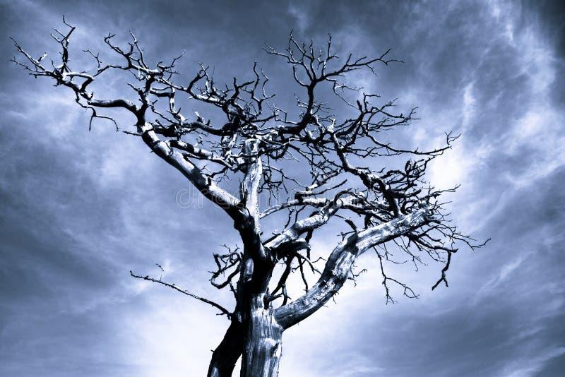 Photo dramatique d'un arbre mort image stock