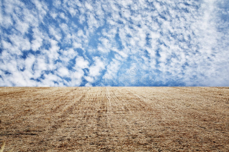 Photo of dry wheat straw field and blue sky horizon line.  stock images