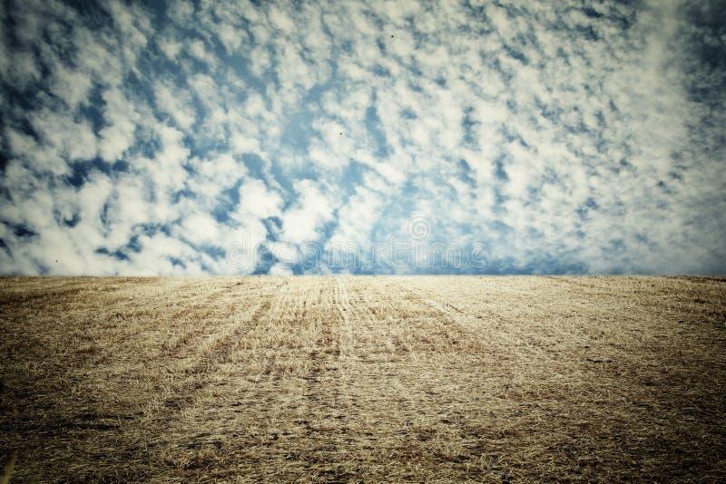 Photo of dry wheat straw field and blue sky horizon line.  royalty free stock photos