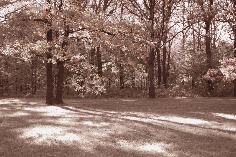 Photo du parc photo stock