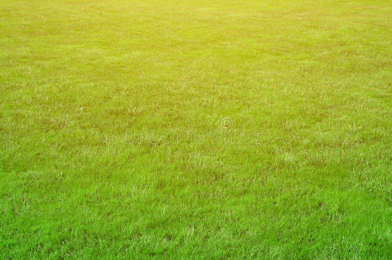 Photo du site avec l'herbe verte égal-cultivée Pelouse ou allée des gras verts frais photos libres de droits
