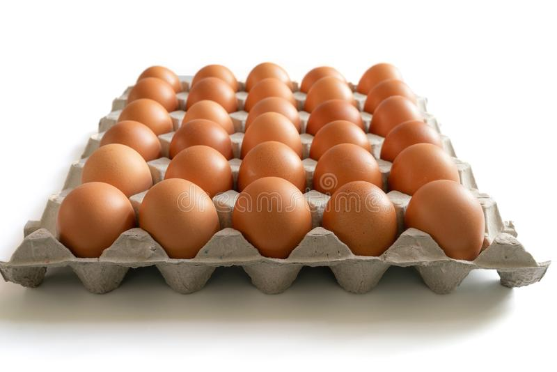 Eggs in the egg tray stock photos