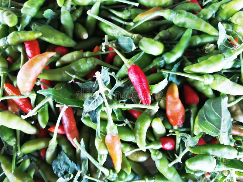 Photo en gros plan des piments rouges et verts image stock