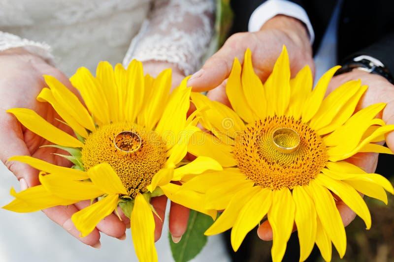 Photo en gros plan des tournesols dans des mains du ` s de couples de mariage photos stock
