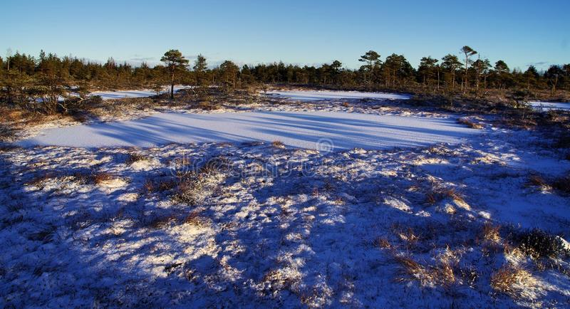 Photo of Field Covered With Snow stock image