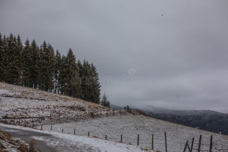 Photo of Field Near Green Trees stock image
