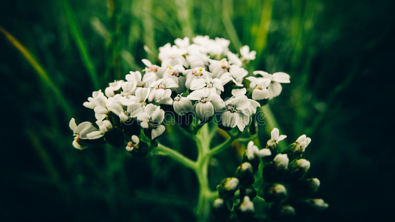 Photo of flowers macro summer green color stock photography