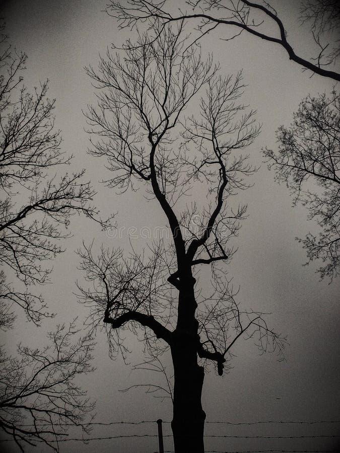 Photo foncée d'ombre de noir d'arbre image libre de droits