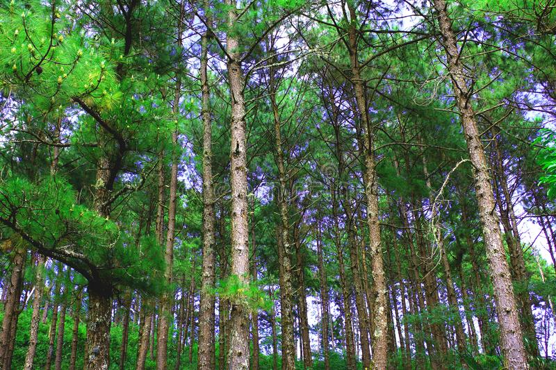 Photo Of Forest stock photography