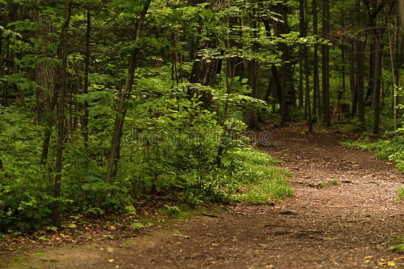 Photo of the forest path in cold weather stock image
