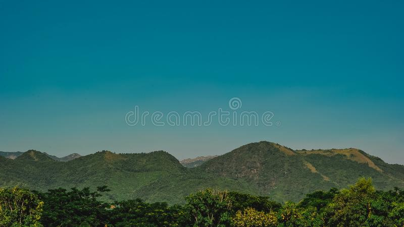 Photo of Forest Trees Near Mountains stock photos
