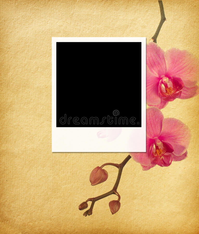 Photo frame. On a paper background with floral elements stock image