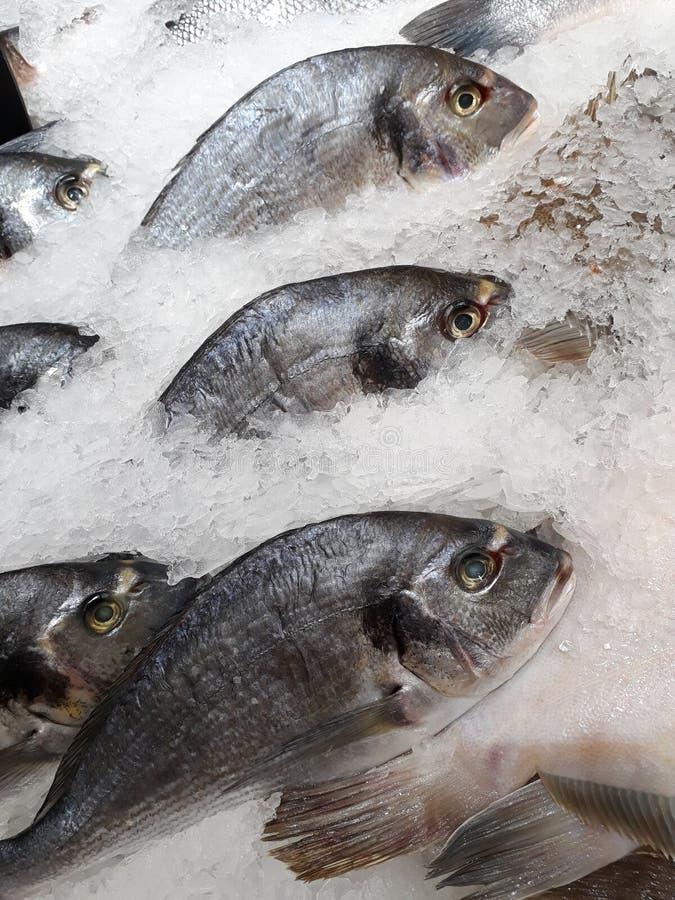 Photo fresh frozen fish royalty free stock photo