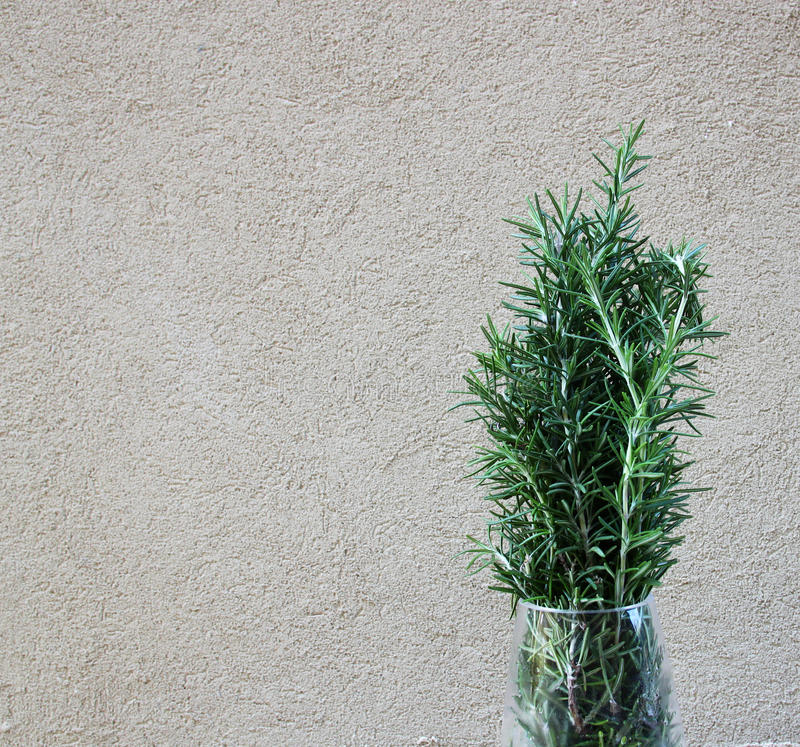 Photo of Fresh Rosemary Herb royalty free stock photos
