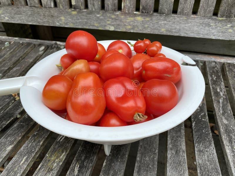 Photo of Fruit of Roma tomato royalty free stock photo