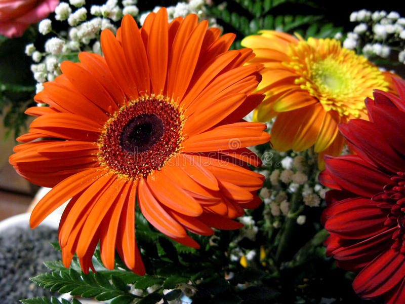 Photo gerbera blossom flower plant bouquet composition.  royalty free stock photo